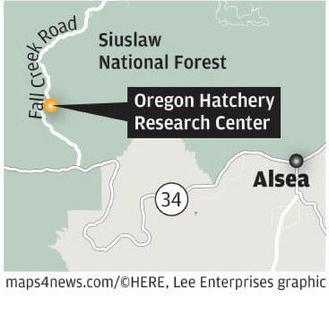 Alsea Oregon Map.Landslide Could Devastate Alsea Salmon Center Eclips